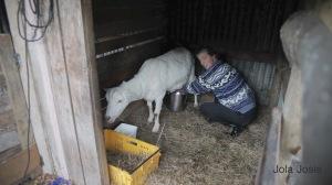 Te Koru Farm 4