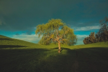tree in sunset (1 of 2)
